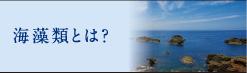 海藻類とは?